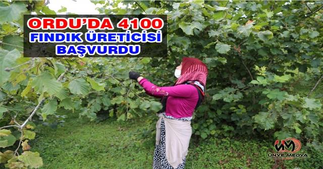 ORDU'DA 4100 FINDIK ÜRETİCİSİ BAŞVURDU