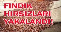 FINDIK HIRSIZLARINA SUÇÜSTÜ OPERASYON 2 KİŞİ YAKALANDI
