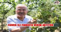 FINVER İLE FINDIKTA VERİM ARTIYOR