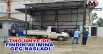 TMO ÜNYE'DE FINDIK ALIMINA GEÇ BAŞLADI